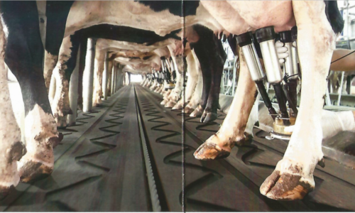 DairyGrid -Durable Rubber Flooring for the Dairy Industry